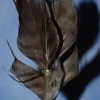 Feather fletches