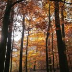 1370251_autumn_light_and_shadow